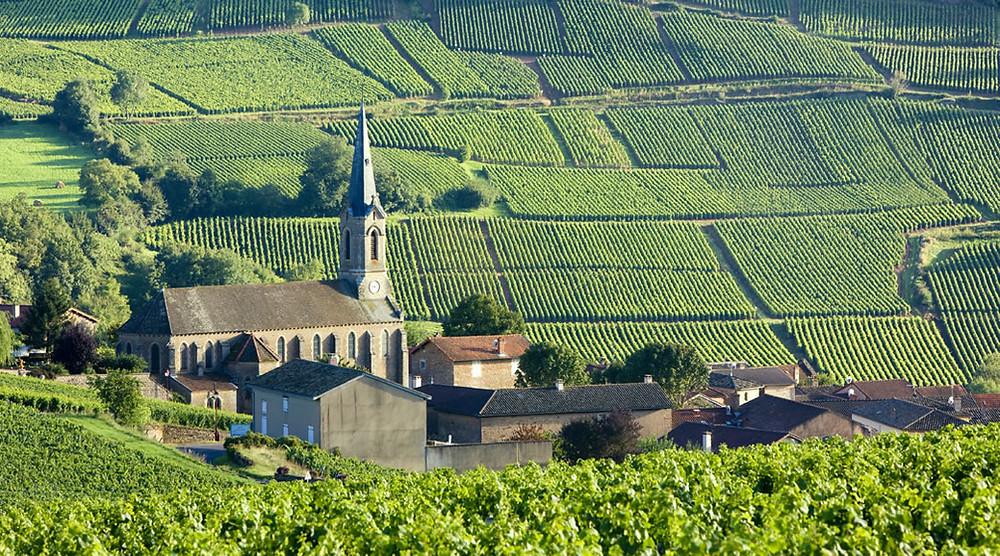 A Aligoté tem sua origem na Borgonha