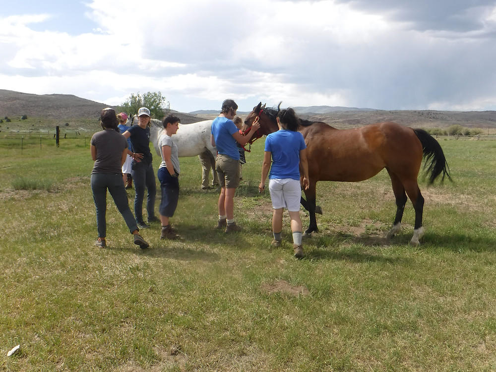 Equine Therapy . Creating Healthy Relationshipsd