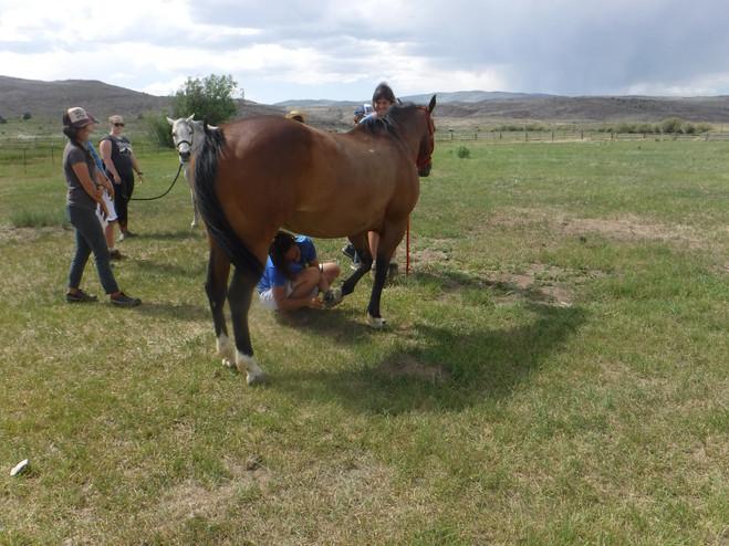 JC.Horses.jpg
