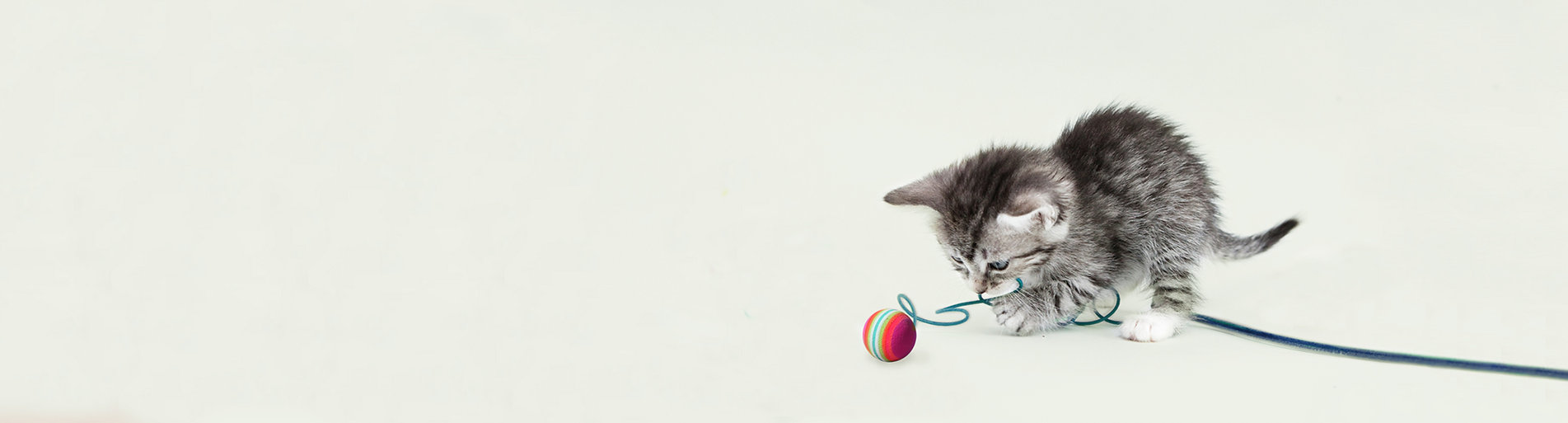 Futter für Kitten