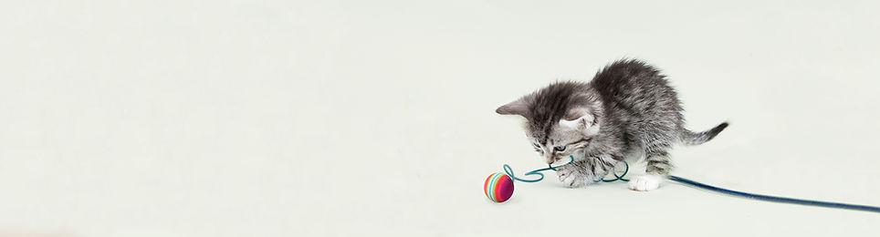 可愛的小貓