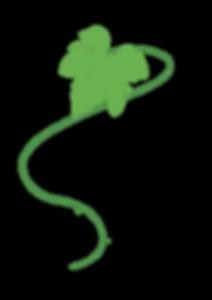 logo feuille vigne.png