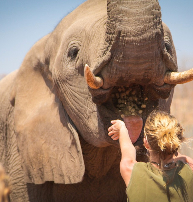 Elephant Art Experience-53.jpg