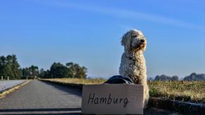 Things to do in Hamburg - 5 Hidden Gems
