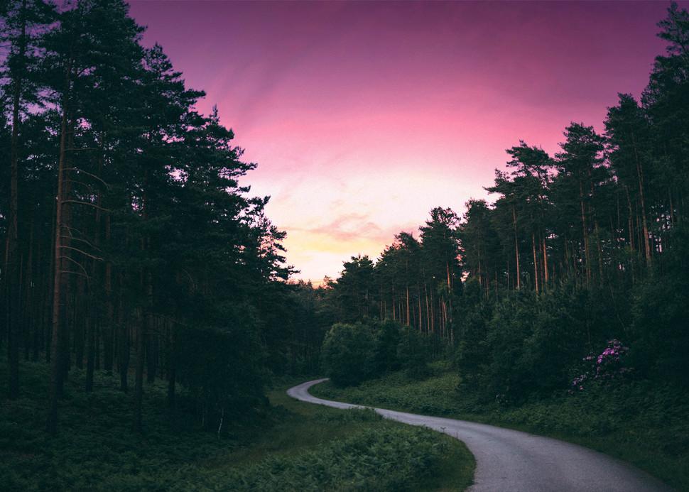 Sunset Forest Hard Light