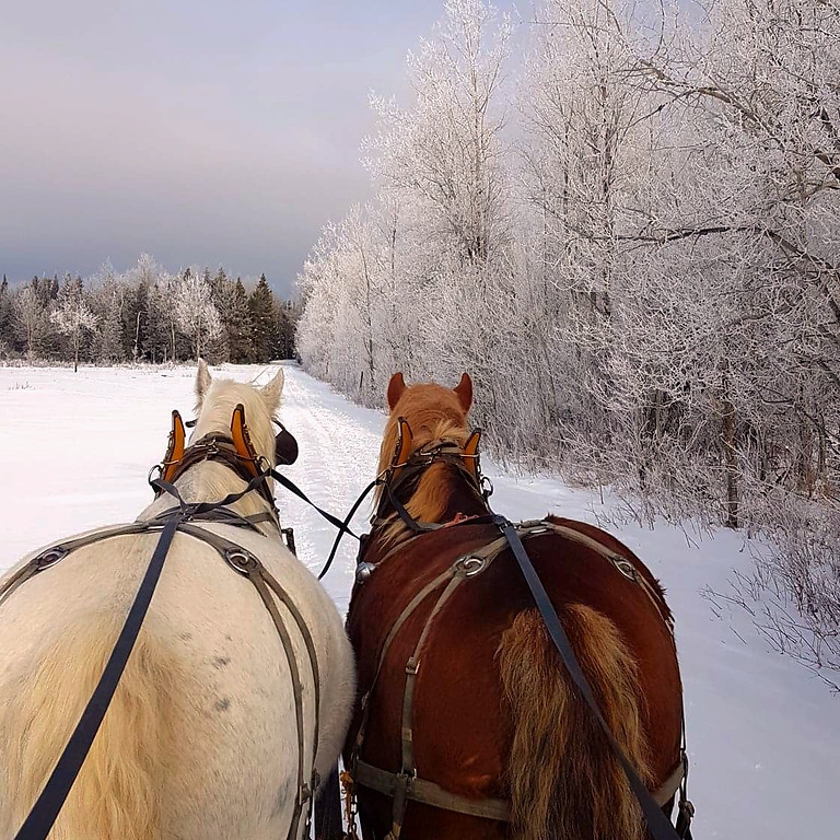 1 Hour Private Horse Drawn Sleigh Rides Daily Monday - Friday March 2021 CANCELLED DUE TO LOSS OF SLEIGH TRAILS