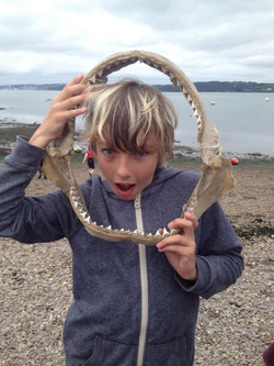 marine biology class