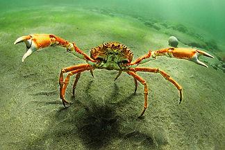 marine life cork