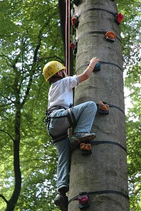 Tree climbing, cork, Ireland