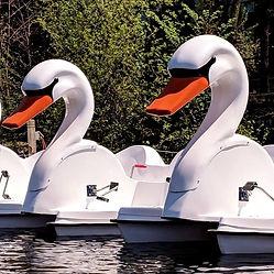 Swans_edited_edited.jpg