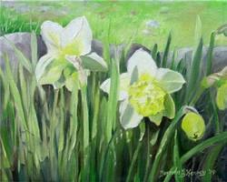 Daffodils and Hope