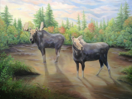 Tryst at Evenfall - a meeting of two moose.