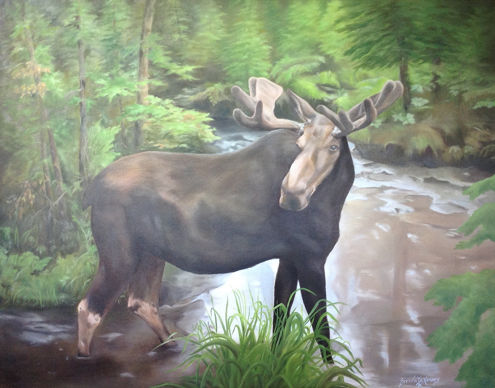 Bull Moose at Moose Alley in Pittsburg, NH