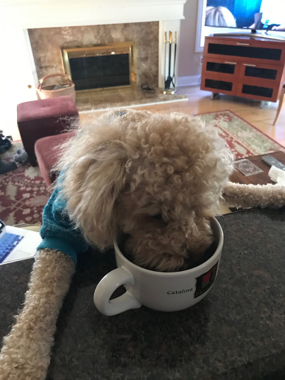 Here is the Company Mascot stealing some cold coffee while I write this post.