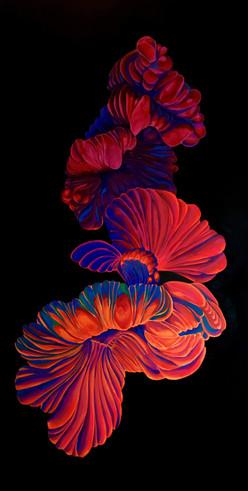 Una flor que es riñon