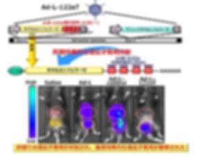 図9. miRNAによる遺伝子発現制御機構を搭載したアデノウイルスベクター