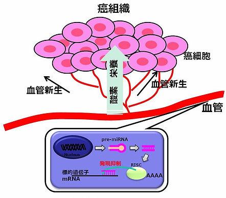 図8. miRNAを介した血管新生制御