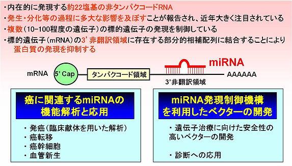 図7. マイクロRNAとは?