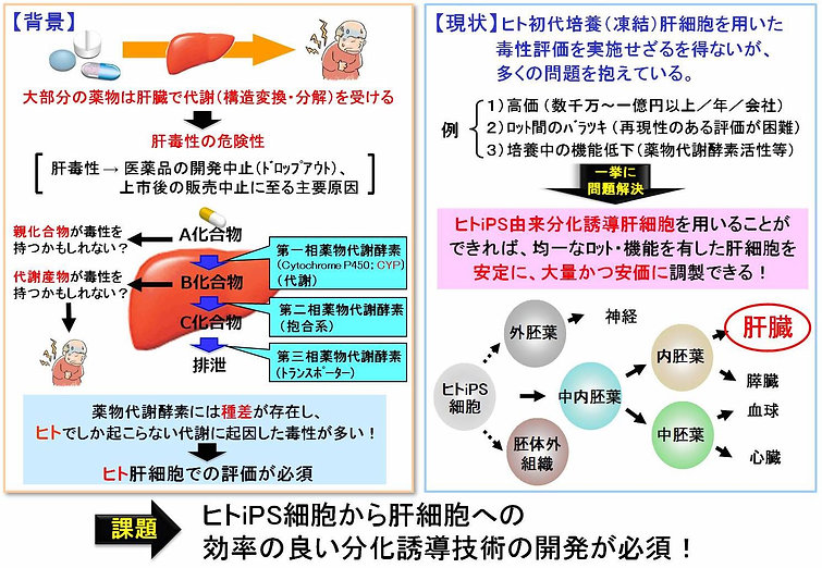 図1. 創薬研究における毒性評価の背景と現状