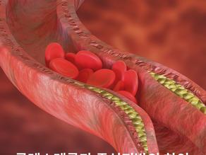 콜레스테롤과 중성지방의 차이