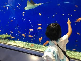 海遊館に行ってきました(*^-^*)