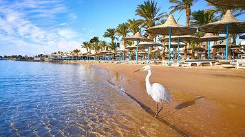 Египет9.jpg