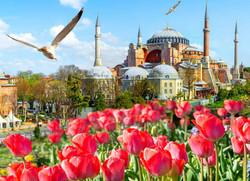 TURKI-TULIP-NEW