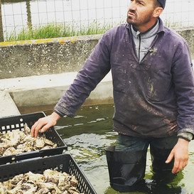 Oysters fresh from the water