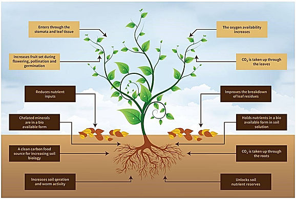 Inoculant and Plant Growth