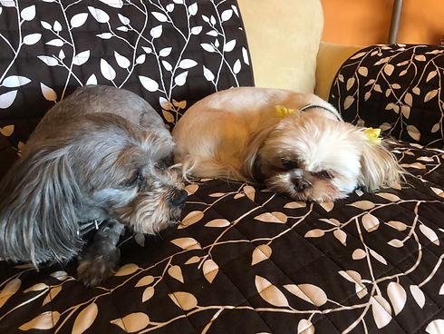 New Pups.jpg