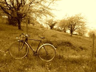 LA BICYCLETTE ET LE POMMIER