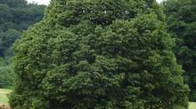Petit lexique impertinent des noms d'arbres