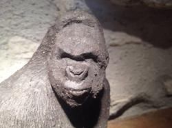Gorille grès noir
