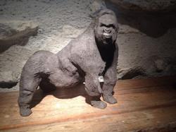 Gorille en terre noire