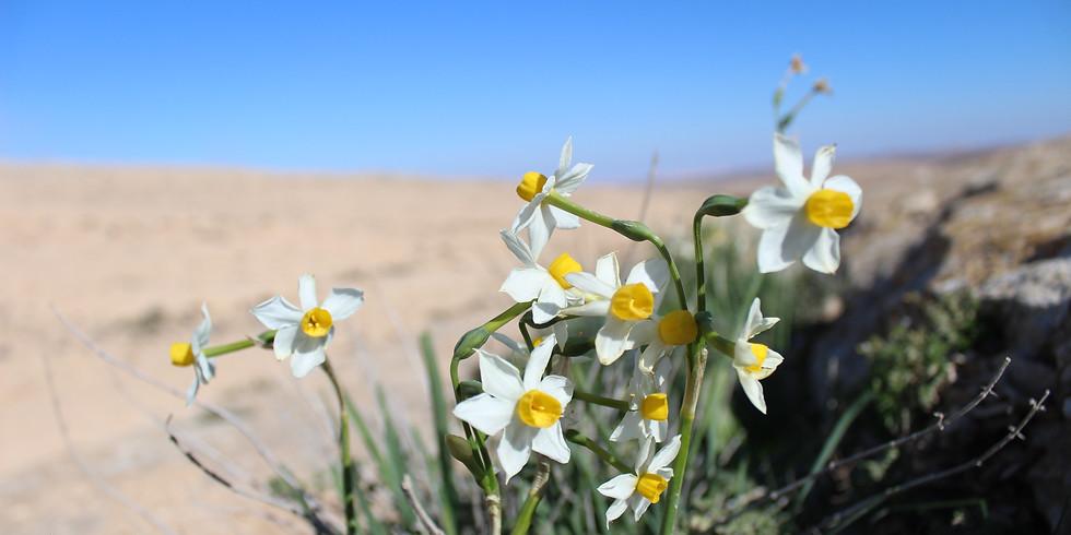 משפחה בפריחה - טיול לנרקיסי נחל דימונה