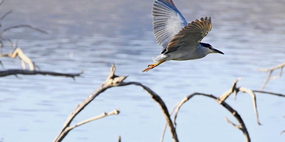 """מוקד כנפי קק""""ל פארק אגם ירוחם / ציפורים - אחד על אחד"""