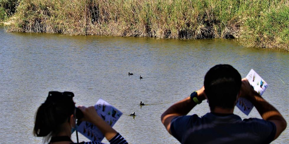 """מוקד כנפי קק""""ל פארק אגם ירוחם / סיורי צפרות לכל המשפחה"""