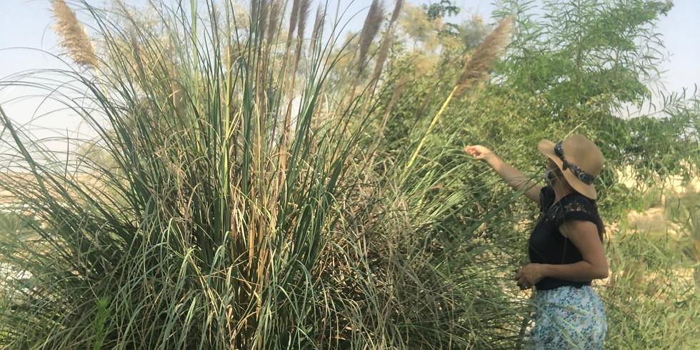 סדנאגם- סיור קטיף #קנים באגם ירוחם