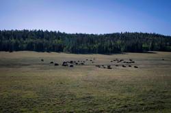 (c) Priscilla Stanley - Utah Road Tripping-18.jpg