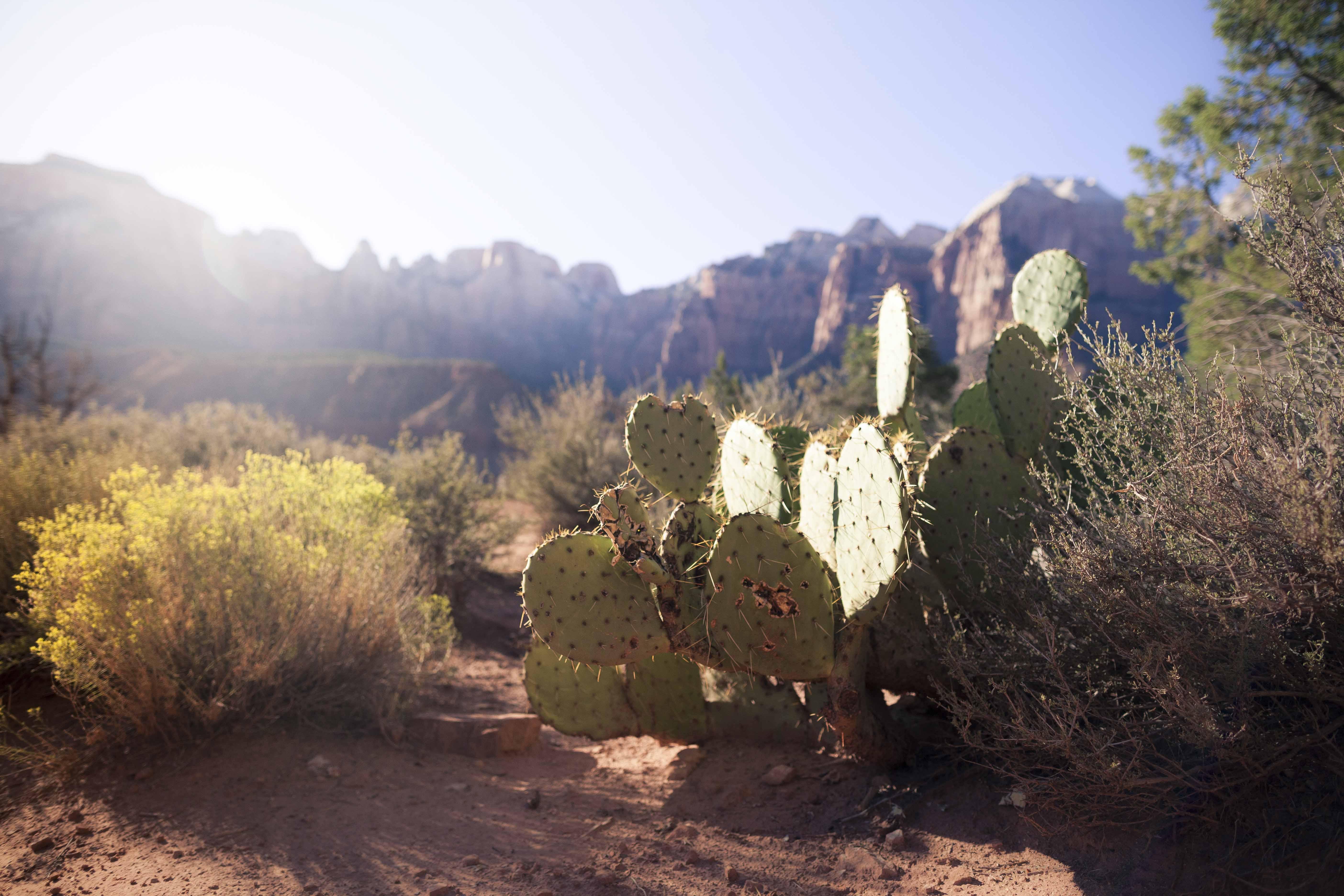 (c) Priscilla Stanley - Utah Road Tripping-10.jpg