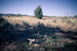 (c) Priscilla Stanley - Utah Road Tripping-12.jpg