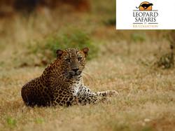 Leopard Safaris Wilpattu