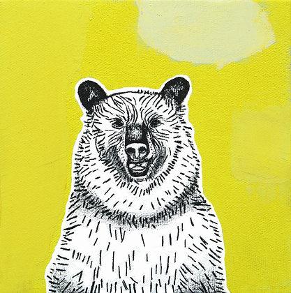 Bear, Man