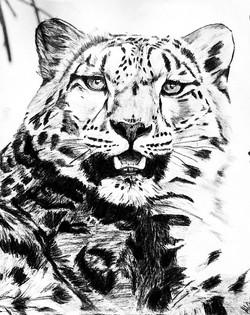 Fall Tiger