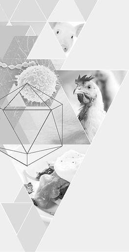 trianglecripableugrise_edited.jpg