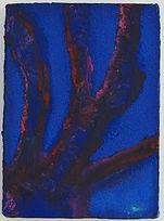 Manzanita #1 copy.JPG