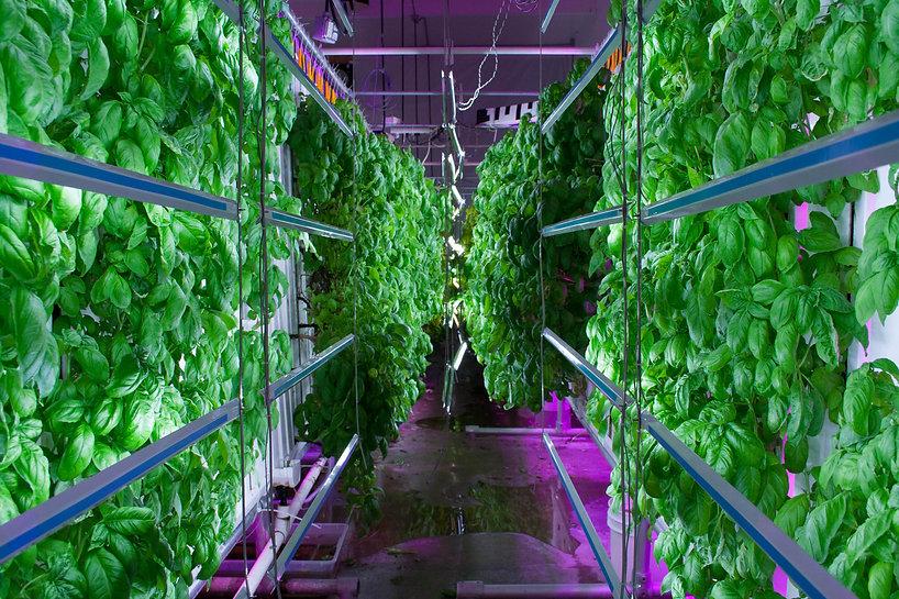 vertical-farming-image.jpg