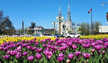 тюльпаны с видом на собор.jpg