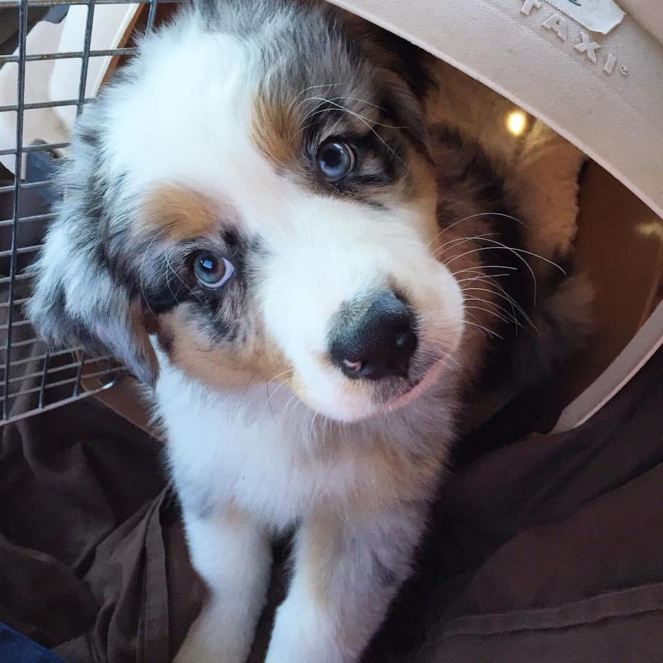 Mav cute face