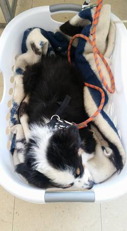 Wish in laundry basket